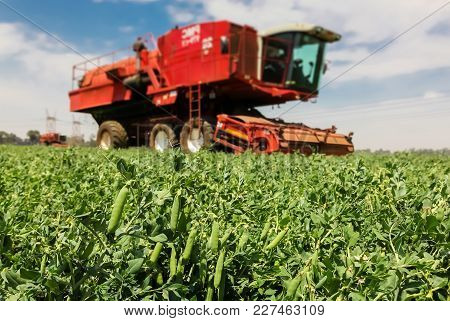 Selective Focus Of A Red Combine Harvester In A Pea Field