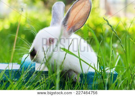 White Rabbit Blue Wattled Basket Green Grass Easter