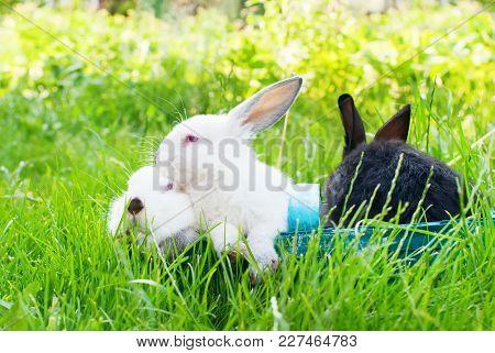 White Black Rabbit Blue Wattled Basket Easter