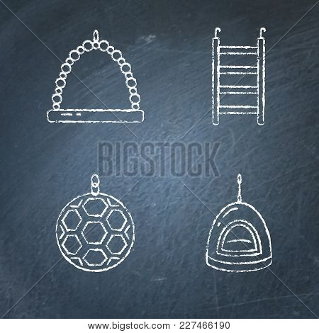 Chalkboard Icon Set Of Accessories For Parrot, Canary Or Other Bird In Cage. Pet Supplies Collection