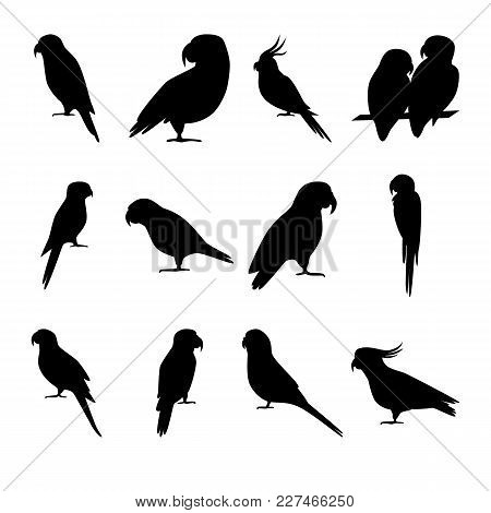 Collection Parrot Vector & Photo (Free Trial) | Bigstock