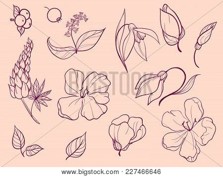 Set Of Sketches And Line Doodle Plant. Thirteen Elements. Flowers, Buds, Petals, Leaves, Berries.