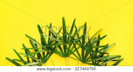 Variations Tropical Palm Leaves Yellow Background Flat Lay Top View