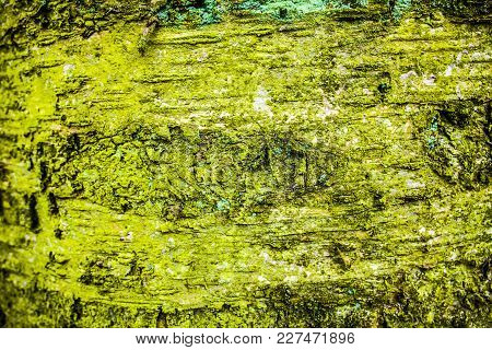 Bark And Moss, Wooden Texture Background, Brown And Green Tree Bark Background. Texture.