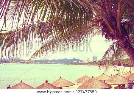Tall, Beautiful Palm Trees Hang Over The Sea, On The Shore Stand Thatched Umbrellas, Sunny Paradise.