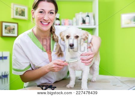 Woman is examining Dog for flea at dog parlor