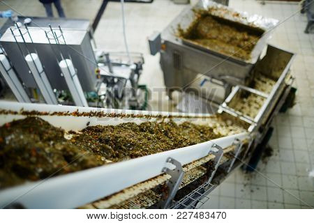 Fresh seaweed salad seasoned with oil and spices moving on production line in fish factory