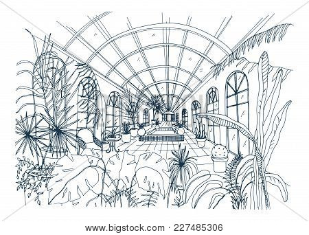 Freehand Drawing Of Interior Of Greenhouse Full Of Tropical Plants. Monochrome Sketch Of Glasshouse