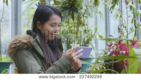 Woman taking photo with cellphone in green house