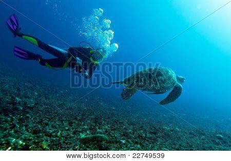 Swimming green turtle (Chelonia mydas) and diver, Gili meno, Lombok, Indonesia
