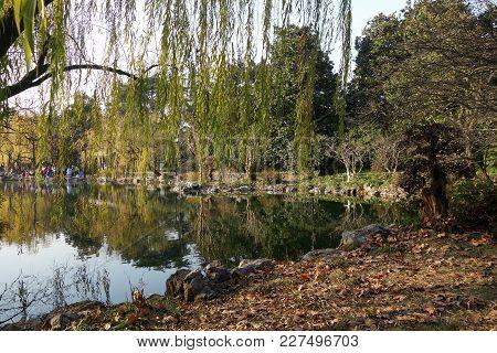 Hangzhou, China-jan 14, 2018: Chinese Park In Hangzhou Near Xihu Lake China. Beautiful Trees Of Will