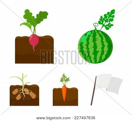 Watermelon, Radish, Carrots, Potatoes. Plant Set Collection Icons In Cartoon Style Vector Symbol Sto