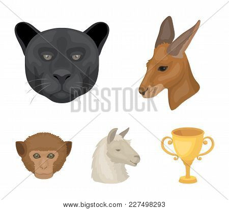 Kangaroos, Llama, Monkey, Panther, Realistic Animals Set Collection Icons In Cartoon Style Vector Sy
