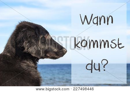 German Text Wann Kommst Du Means When Are You Coming. Flat Coated Retriever Dog Infront Of Ocean. Wa
