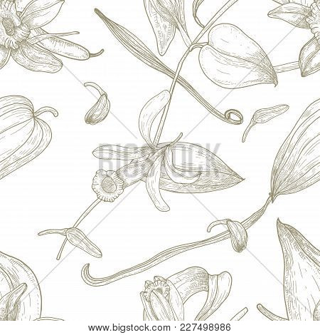 Botanical Seamless Pattern With Vanilla, Leaves, Flowers, Fruits Or Pods Hand Drawn With Contour Lin