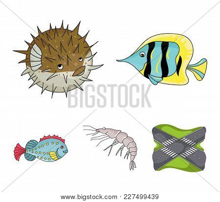 Shrimp, Fish, Hedgehog And Other Species.sea Animals Set Collection Icons In Cartoon Style Vector Sy
