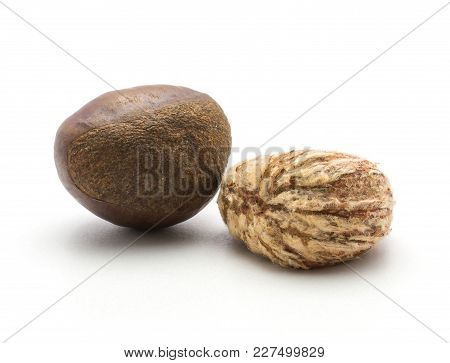 Two European Chestnuts One Spanish Edible Peeled Isolated On White Background Raw Fresh Brown Nuts
