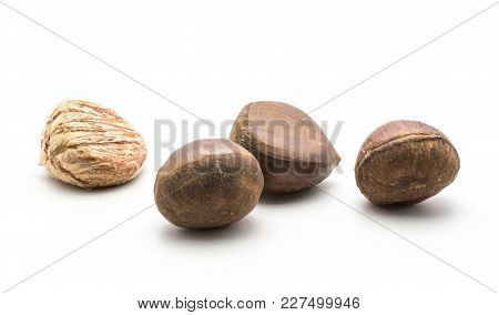 Four European Chestnuts Isolated On White Background One Spanish Edible Peeled Raw Fresh Brown Nuts