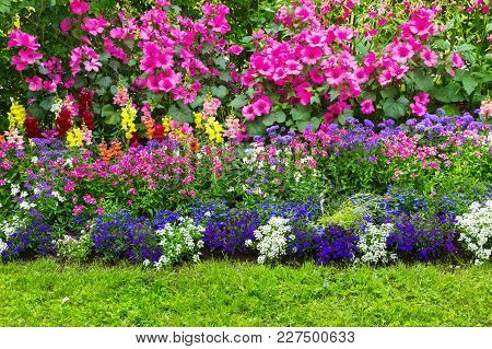 Flower Bed With Different In Size And Color Flowers