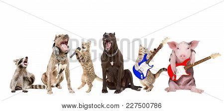 Group Of Funny Animals Musicians, Isolated On White Background