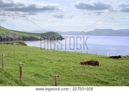 The Dingle Peninsula On The Wild Atlantic Way In County Kerry Ireland