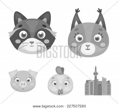 Protein, Raccoon, Chicken, Pig. Animal's Muzzle Set Collection Icons In Monochrome Style Vector Symb