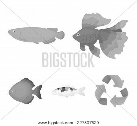 Discus, Gold, Carp, Koi, Scleropages, Fotmosus.fish Set Collection Icons In Monochrome Style Vector