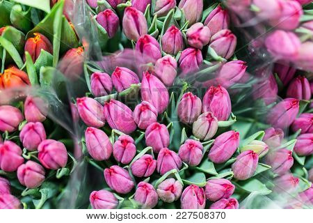 Bunch Of Many Beautiful Fresh Pink Tulips. Wholesale And Retail Flower Store. Flower Shop Or Market.