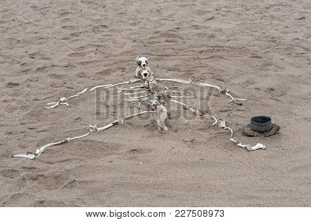 Human Skeleton Built From Animal Bones On The Skeleton Coast In Namibia