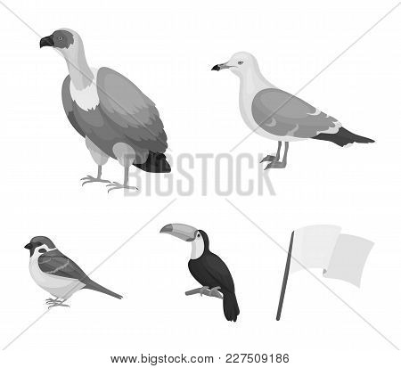 Gull, Toucan And Other Species. Birds Set Collection Icons In Monochrome Style Vector Symbol Stock I