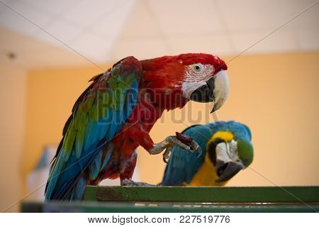 Two Colorful Beautiful Parrots On A Cage
