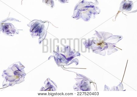 dry flowes on the white