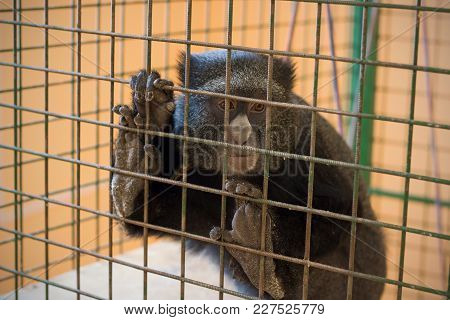 A Sad Monkey In A Cage Hanging On A Grate