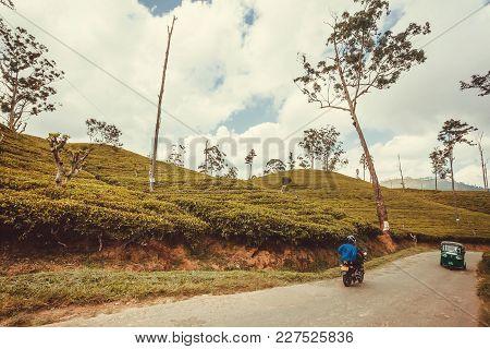Ella, Sri Lanka - Jan 2, 2017: Bike Driving Past Tea Plantations At Rural Landscape On January 2, 20