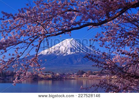 Mount Fuji And Cherry Blossoms From Lake Kawaguchi