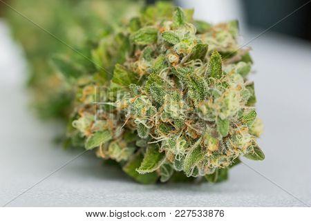 Macro Close Up Of A Fresh Female Cannabis Plant