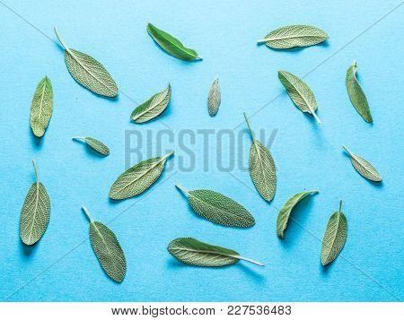 Fresh velvet leaves of garden sage on the blue background.