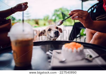 A Dog Wants To Eat A Cake, Sit Looking At Someone Eating A Cake.