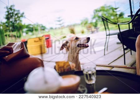 Cute Dogs Waiting For Food From People.
