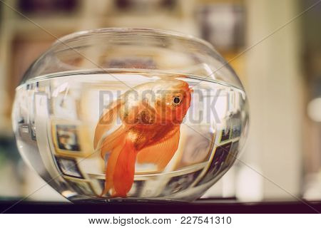 Dead Fish In A Clear Glass, With Reflections From The Backdrop.