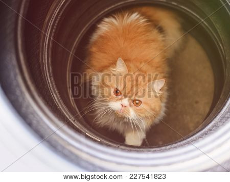 Naughty Cat, Playing, On A Tire Wheel.