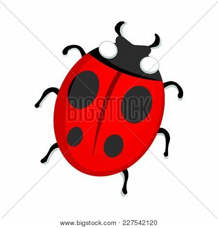 Ladybug Icon. Love And Gifts For Web On White Background. Flat Vector Illustration