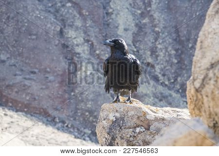 Close-up Shot Of Raven On Rock Formation On Sunny Day