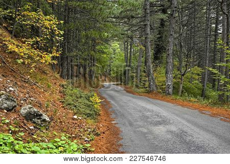 Empty Road In An Autumnal Crimean Forest.