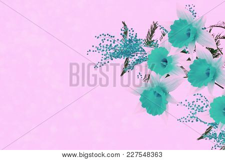 Bright Spring Flowers Daffodils And Mimosa. Floral Background.