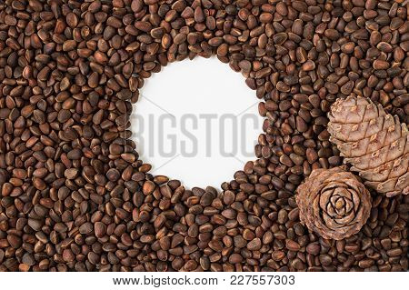 Brown Fresh Natural Whole Pine Nuts, Seeds On Siberian Pine. Round White Empty Space As Frame In The
