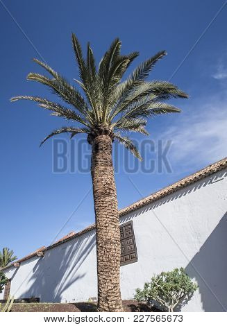 Low Angle View Of Palm Tree Against White Wall And Blue Sky