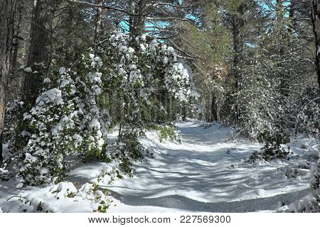path and branches of trees snow covered in Etna Park, Sicily