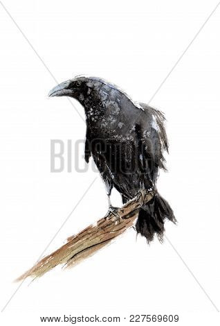 Watercolor Picture Of A Raven On A Branch
