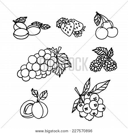 Fruit And Berry Sketch On White Background. Strawberry, Raspberry, Grape, Cherry, Currant, Plum, Apr
